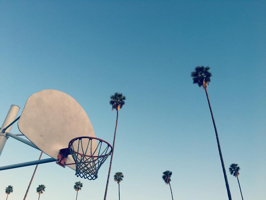 #bluesky #palmtrees #basquetball