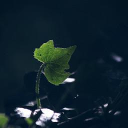 nature sunlit backlit outandabout dodger