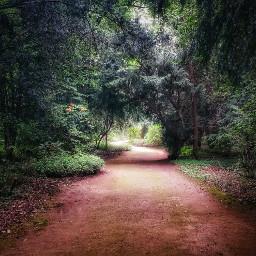 exploringnature nature intheforest forest
