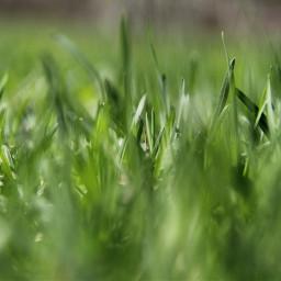 grass nature green summer