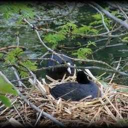 nesting photography nature emotions freetoedit