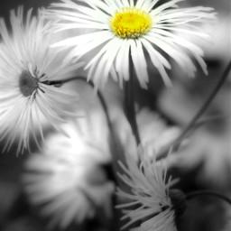 quotes blackandwhite nature colorsplash photography