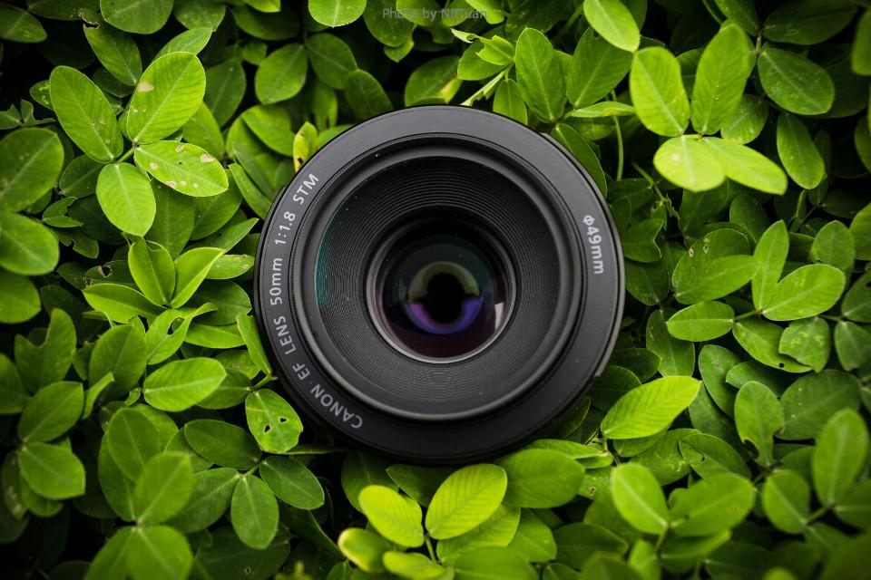 #StillLife #nature #photography #summer #canon