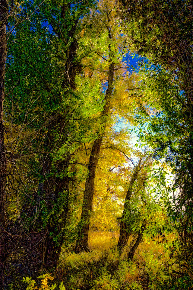 Golden Thicket #nature#landscape#trees#autumn#colorful#freetoedit