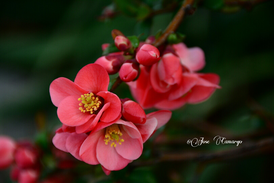 #flower  #photography #Nikon #spring #summer #colorful #nature #love  #emotion  #seasons