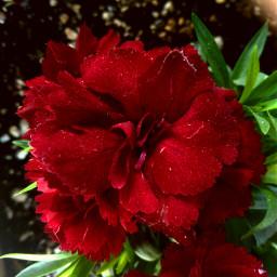 flower mothernature naturelovers nature volumeone