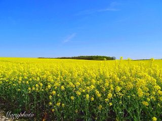 wppflowers photography landscape france flowers