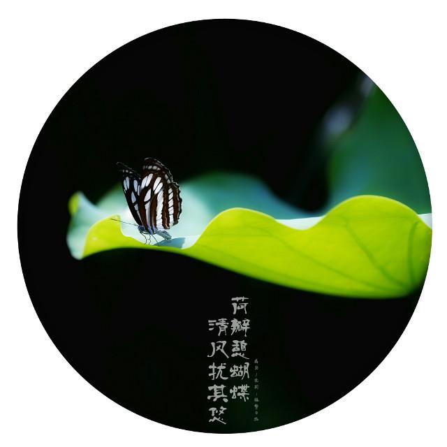 #flower #summer  #fly  #butterfly #花 #夏天 #飞 #蝴蝶