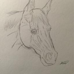 wip drawing horseart idrew