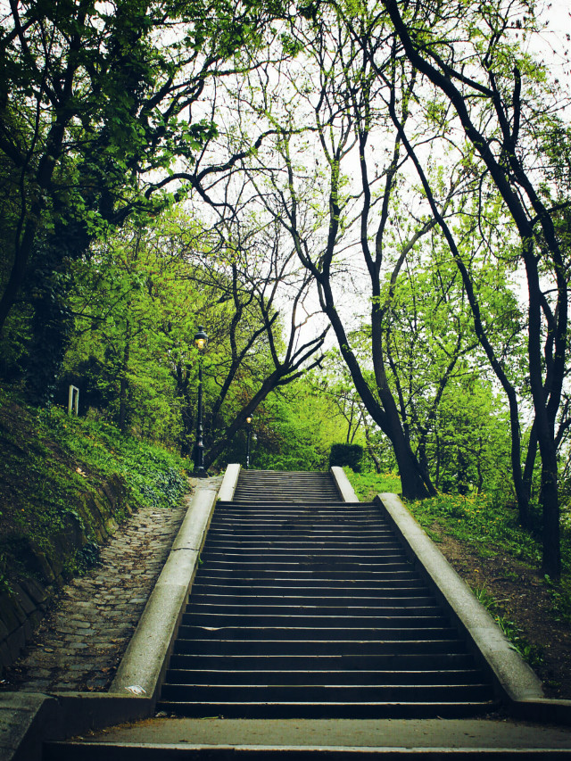 #forest #photography  #nature #colorful #travel #tree  #stairs