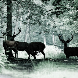 wildlife deers forest nature forestlife