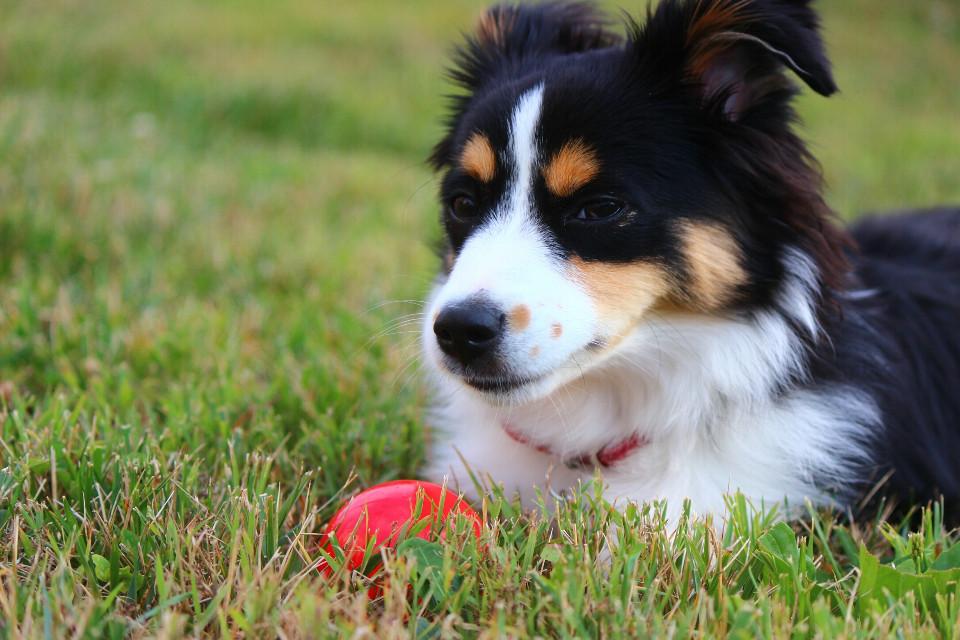 #photography #puppy #dog