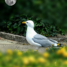 freetoedit seagull