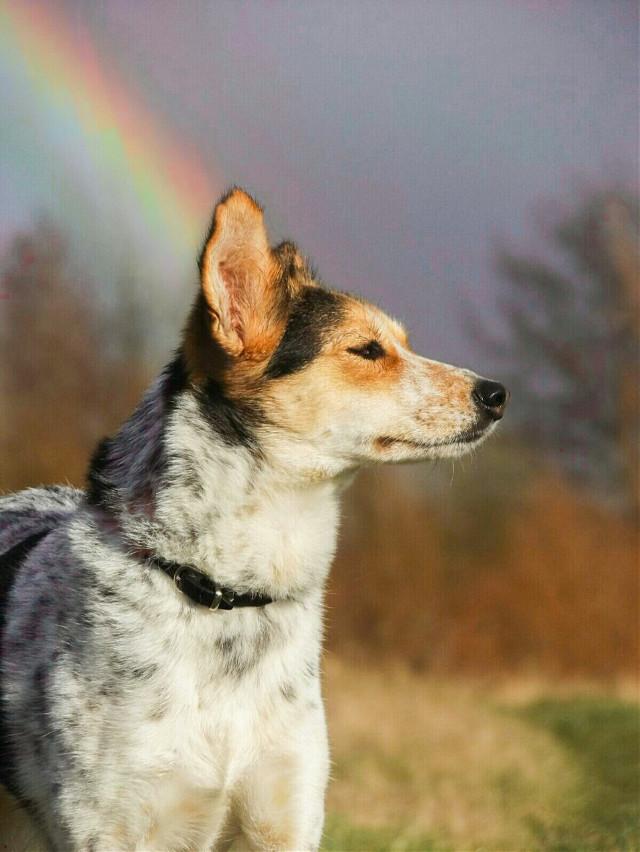#rainbow #colorful #nature #dog #petsandanimals #photography