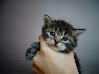freetoedit kitten cute sweet cat