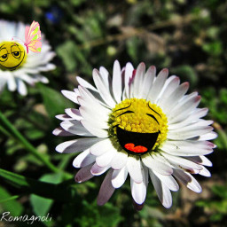 love daisy nature butterfly emotions freetoedit