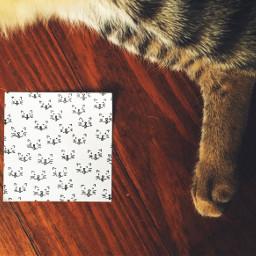 cats postit doodle illustration tinyart