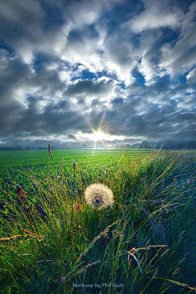 """ Good Day Sunshine "" - Wisconsin Horizons by Phil Koch.   #colorful #emotions #flower #hdr #nature #photography #summer #travel #canon #country #rural #peace #sunrise #green #outdoors #goodmorning #Light #Clouds #landscape #flowers"