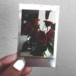 polaroid instax instaxmini7s film filmisnotdead nailpolish roses flowers FreeToEdit