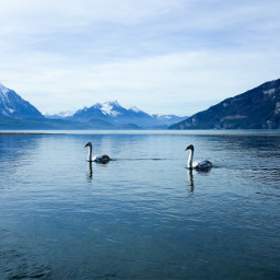 landscape lake mountains cygnus paradise freetoedit
