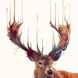 wild free deer tumblrstyle digitalart