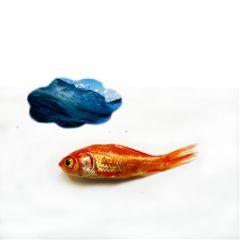 freetoedit remix remixgalleries fish dream