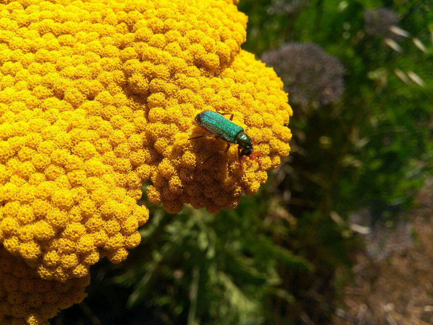 #bug  #colorful #flower #nature #photography #plant