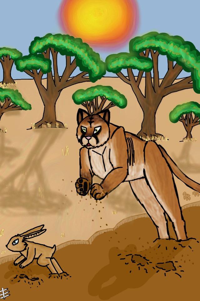#puma #bonnie #hase #savanna #savanne #tree #baum #schlamm #sun #sonne #nachmittag #shadows #schatten