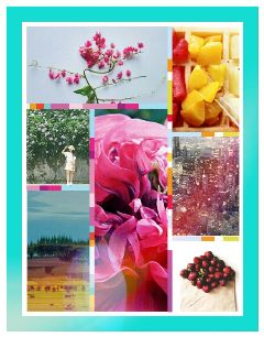 collage colorsplash colorful flower food freetoedit