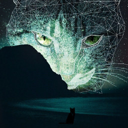 wapcatears night star sea cat beach wonderful edited byme winner