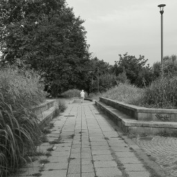 man people walk allure atmosphere