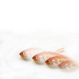 photography myedit fish clone freetoedit