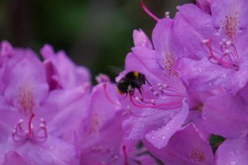 wppfloralcanvas bumblebee flower photography