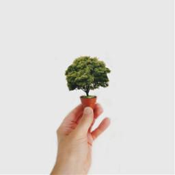 freetoedit hands minimalism fantasy tree