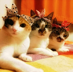 threestylishcats