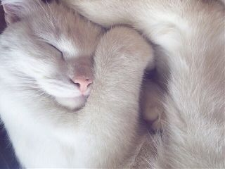 freetoedit kat