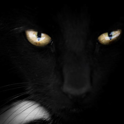 photography petsandanimals cat eyes