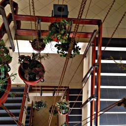 plants flora flowerpots chains staircase