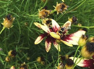 flower yellow purple bumblebee nature freetoedit
