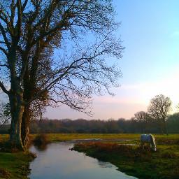 scenery pony newforest photography stream