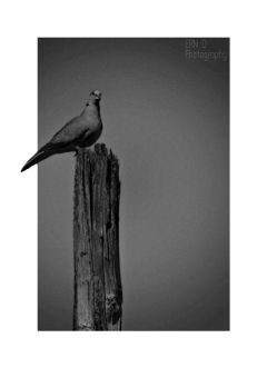 photography blackandwhite bird border stretchtool