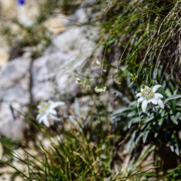 stellalpina pasubio italy landscape nikon