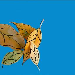 freetoedit photography edited doodles blue minimalism