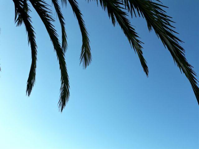 #freetoedit,#palmera,#palmtree,#sky,#blueskuy