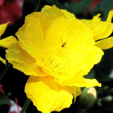 #yellowflower